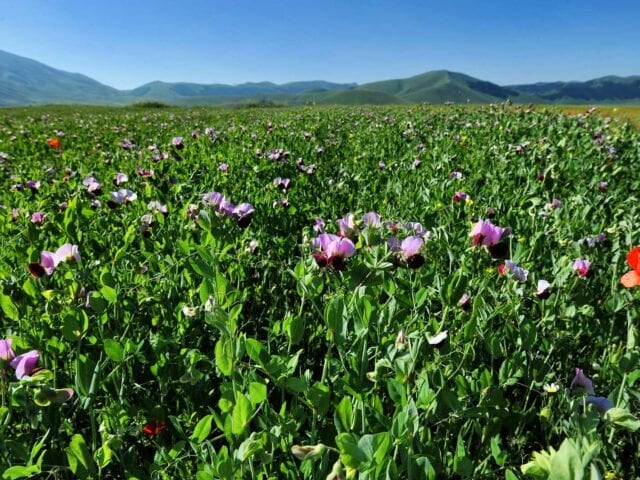 Agriturismo e azienda agricola a Castelluccio di Norcia