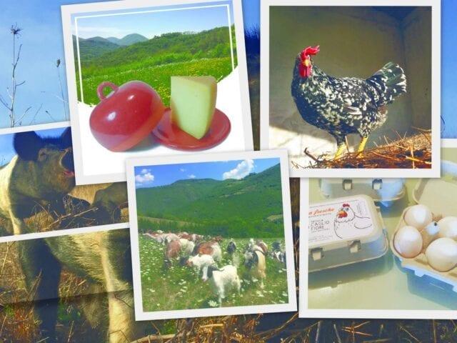 Suini, polli, legumi, cereali e ceramiche nella fattoria didattica