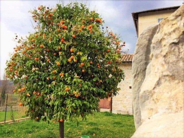Il melangolo e l'olio agrumato della Valnerina